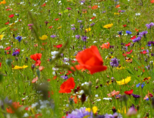 Nasiona traw i łąki kwietne